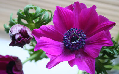 Bloom of the Week