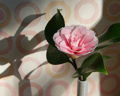 Camelliainvase1