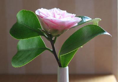 Camelliaprofile