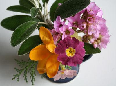 Bloom of the Week – Bergenia crassifolia