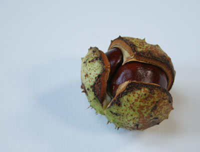 I love conkers
