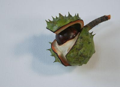 Penkridge-conker