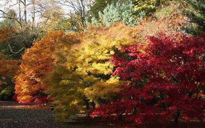 Westonbirt Arboretum Inspires