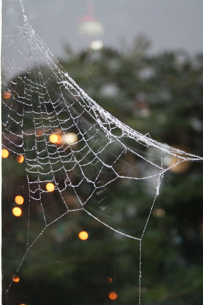 Web-and-christmas-lights