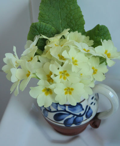 Primroses-in-blue-jug