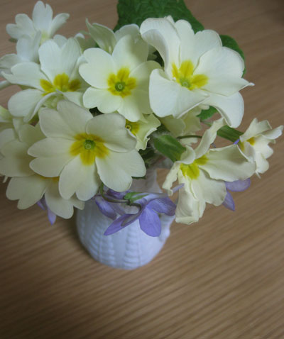 Primroses-in-white-jug
