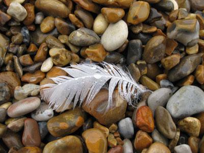 Wet-feather-aldeburgh