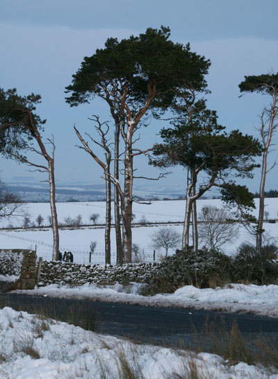 Caldbeck-common-in-snow