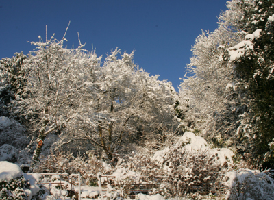 Snow-in-my-garden