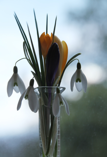 Crocus-and-snowdrop-silhoue