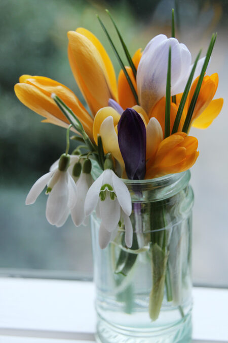 Bloom of the Week – Snowdrops and Crocus