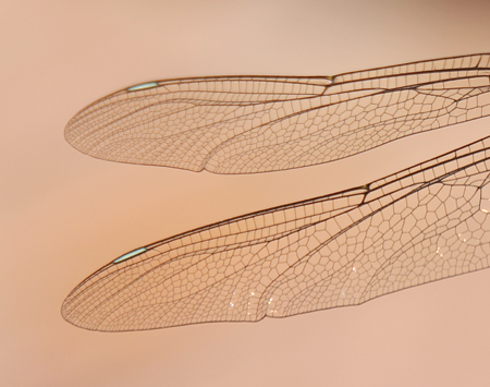 Dragonfly-wings