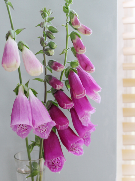 Foxgloves-in-vase