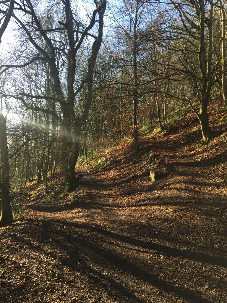Woodland paths Malvern Hills
